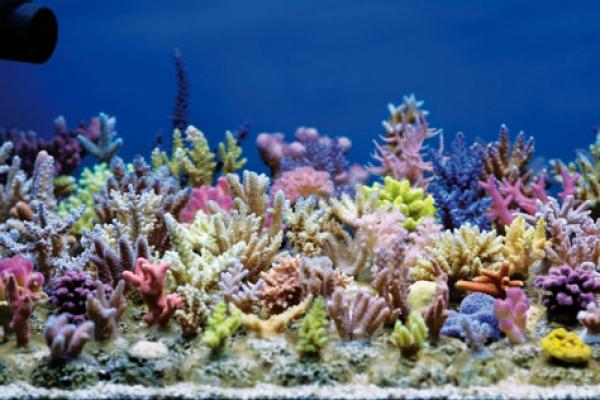 aquarium-fragoviC4460B7F-D036-242D-3652-EB0A20B36547.jpg