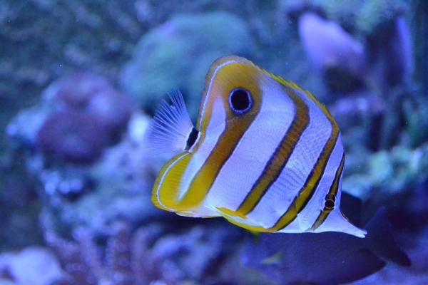 fish-67656959DC62D4-5F8A-F6FB-2B60-D369A5D846F4.jpg